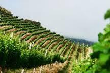 vinhos de latitude